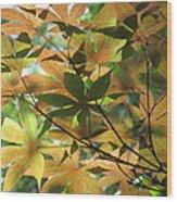 Shadows Of Maple  Wood Print