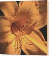 Day Lily Shadows Wood Print