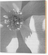Shadows On A White Rose Wood Print
