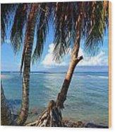 Shady Palm Beach Wood Print