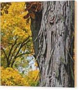 Shagbark Hickory Tree Wood Print