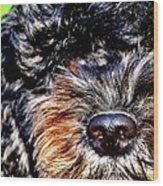 Shaggy Black Dog Wood Print