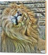 Shake It Off Lazy Boy At The Buffalo Zoo Wood Print