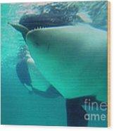 Shamu Was  1965-1971 Orca Sea World California 1968 Wood Print