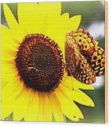 Sharing The Sunflower Wood Print