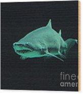 Shark-09441 Wood Print