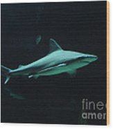 Shark-09451 Wood Print