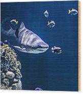 Shark Hunting Wood Print