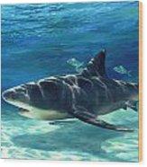 Shark In Depth Wood Print