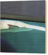Shark - National Aquarium In Baltimore Md - 12123 Wood Print