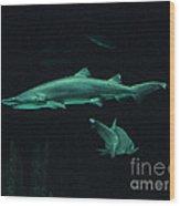 Sharks-09433 Wood Print