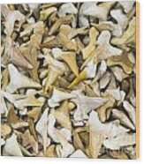 Sharks Teeth Wood Print