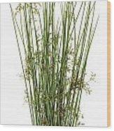 Sharp Grass Wood Print