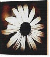 Shasta Daisy - Sepia Tones Photograph Wood Print