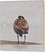 Shawnee Park Geese Wood Print