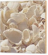 She Sells Seashells Wood Print by Kim Hojnacki