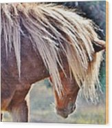 She Tossed Her Mane - Wild Pony Of Assateague Wood Print