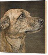 Sheeba Wood Print by Hazel Billingsley