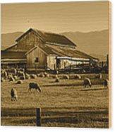 Sheep And Barn Wood Print