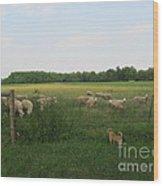 Sheep And Dog Wood Print