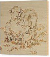 Sheep And Lambs Wood Print