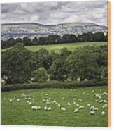 Sheep And More Sheep Wood Print
