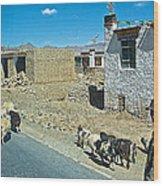 Sheep And Shepherd Along The Road To Shigatse-tibet Wood Print