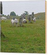 Sheep And Stones At Avebury Wood Print