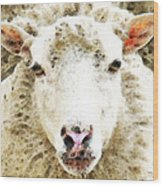Sheep Art - White Sheep Wood Print