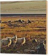 Sheep At Sundown  Wood Print