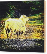 Don't You Look At Me With That Sheep Attitude  Wood Print