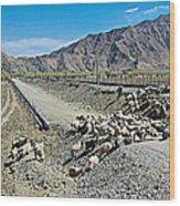 Sheep Crossing The Road To Shigatse-tibet  Wood Print