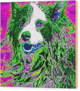 Sheep Dog 20130125v2 Wood Print