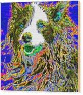 Sheep Dog 20130125v3 Wood Print by Wingsdomain Art and Photography
