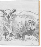 Sheep Drawing Wood Print