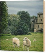 Sheep Grazing By Castle Wood Print