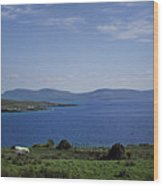 Sheep Grazing By The Irish Sea - Donegal Ireland Wood Print