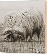Sheep Grazing Wood Print