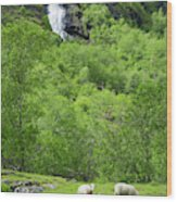 Sheep In A Grassy Mountain Field Wood Print