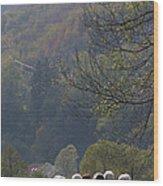 Sheep In A Line Wood Print