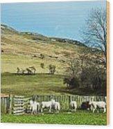 Sheep In Meadow Wood Print