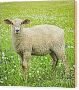 Sheep In Summer Meadow Wood Print