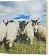 Sheep In The Field Wood Print