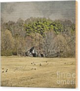 Sheep In The South Wood Print by Jai Johnson