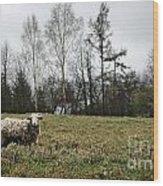 Sheep In Village Field Wood Print