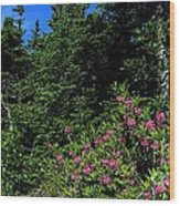 Sheep Laurel Shrub Wood Print