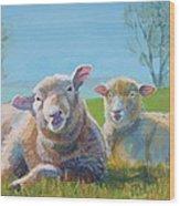 Sheep Lying Down Wood Print