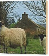 Sheep Of Donegal Ireland Wood Print