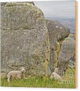 Sheep On A Mountain Pasture Between Granite Rocks Wood Print