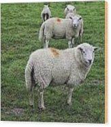 Sheep On Parade Wood Print